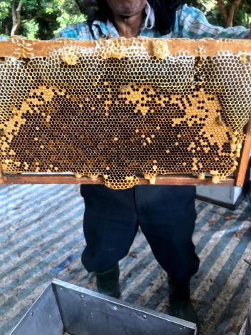 02蜂巢內的蜂蜜