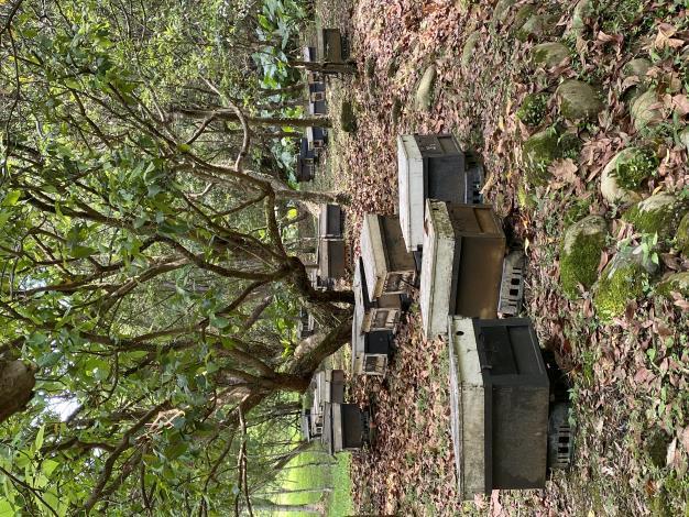 01放置於內雙溪自然中心的蜂箱