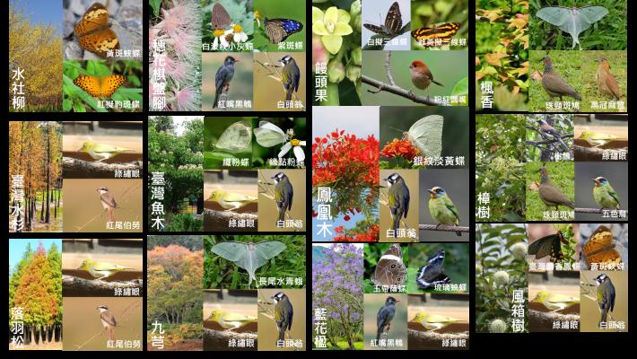 照片4:生態棲地營造