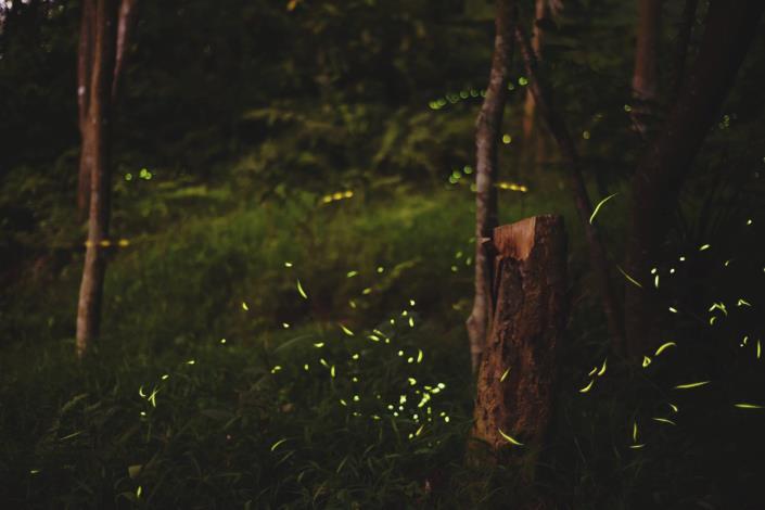 照片1:虎山螢火蟲生態區營造