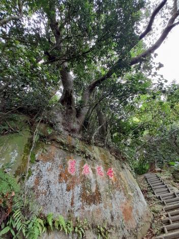 3-步道旁可見過去駐軍留下的「毋忘在莒」刻字和岩石頂上的大樹景觀