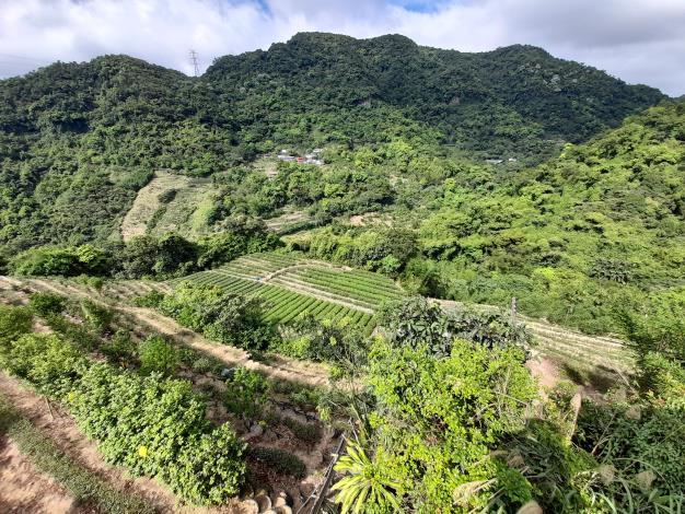 08遇茶展中心步道叉路右轉後不久,便可看到廣闊山谷和大片的茶園
