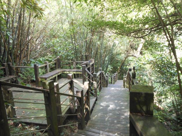 06從茶推廣中心對面登山口進入健康步道山林小徑.JPG