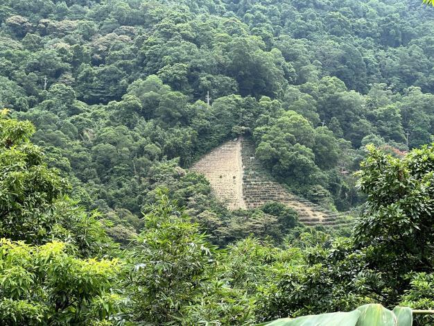 04貓空小天空步道可遠眺復舊造林區域,期許10年後成林可賞櫻賞楓