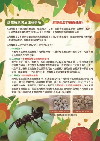 荔枝椿象宣導摺頁-02