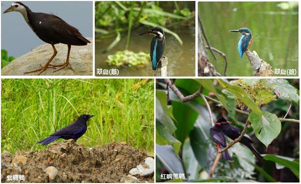 發現鳥類回歸蹤跡