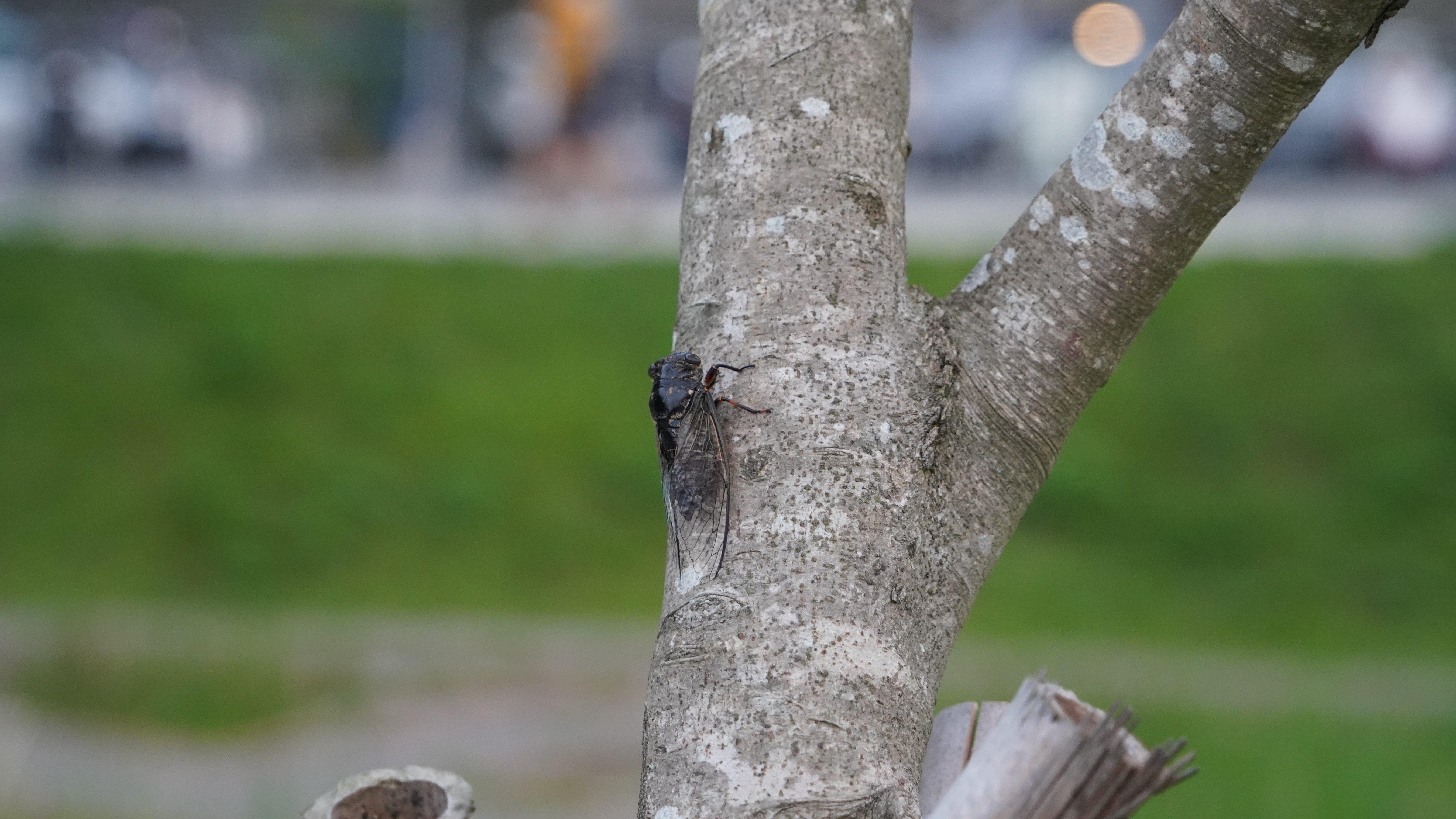 蟬聲繚繞整個永春陂濕地公園