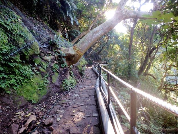 手作步道與迴避保護植栽措施
