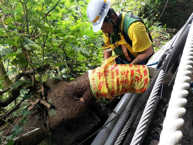 施工中生態保護措施