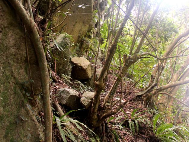 溪山百年古圳步道改善前照片(邊坡下方常有落石倒樹)