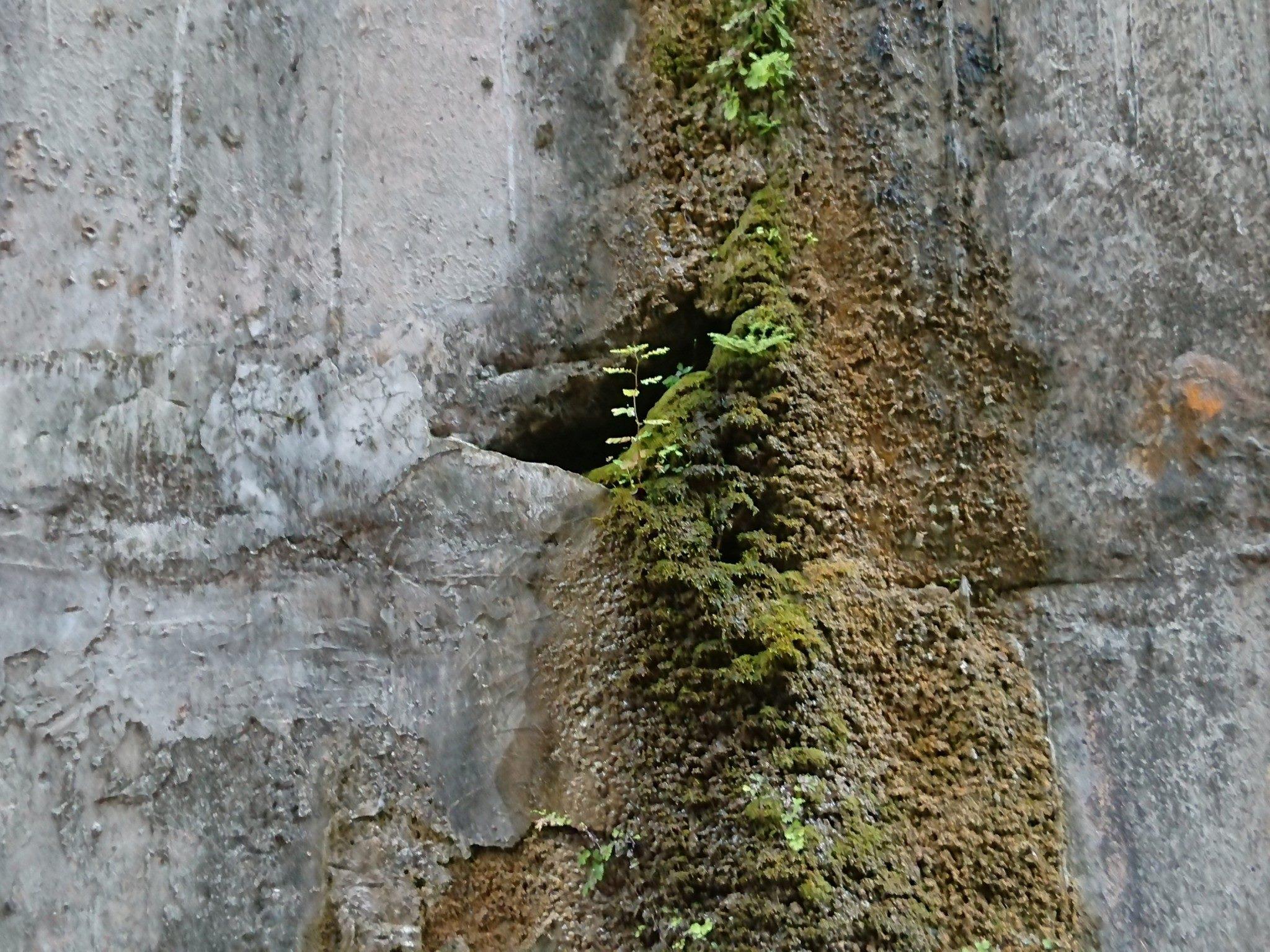 擋土牆多處蝕洞及裂縫