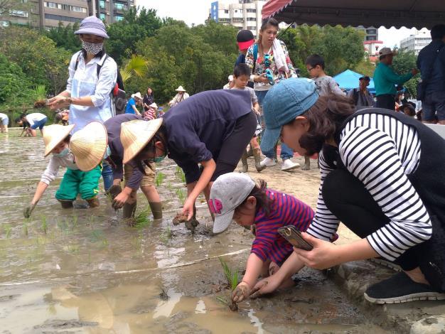 民眾學習種稻