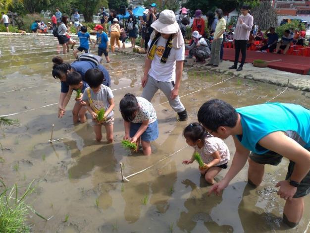 小孩學習種稻