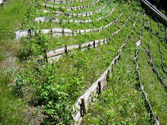 照片5採用植生工法進行水土保持
