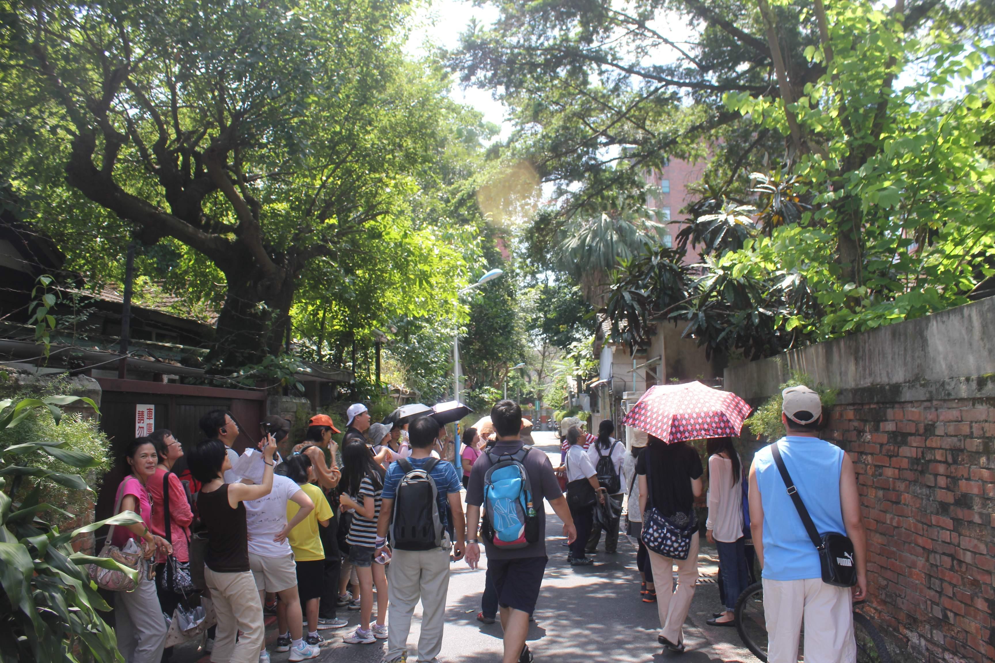 圖表:「自由主義懷舊之路」線,民眾欣賞台灣油杉。