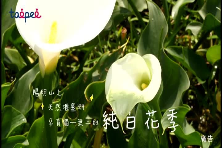 2019竹子湖海芋季活動宣傳短片