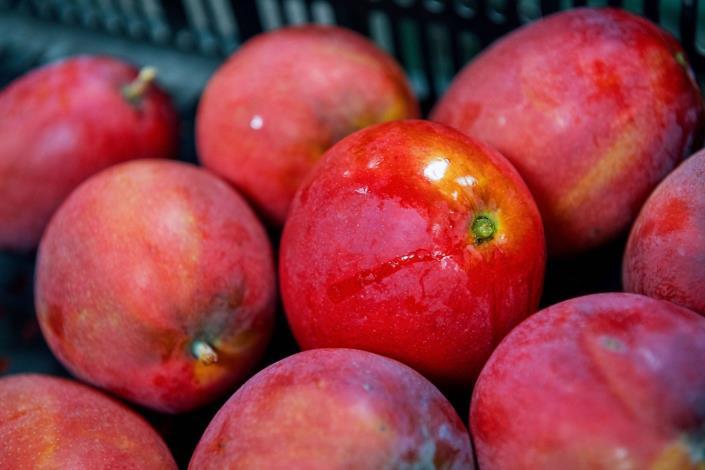 轉色均勻且成熟度高的芒果