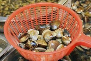 松江市場.蛤蛤世界
