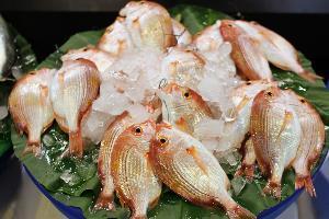 木新市場.54號鮮魚攤