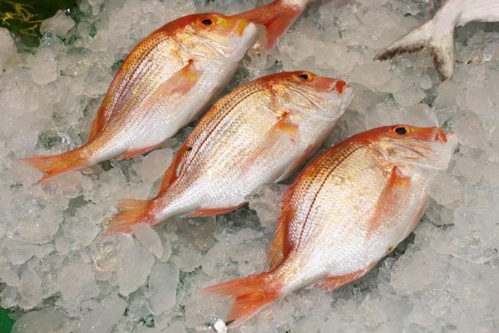 琦美水產每天攤子上的魚鮮