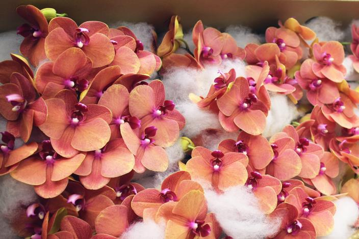 台北花市-花星鮮花
