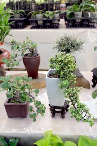 花作坊門市每一個小盆栽,都經過邱瑞珍老師的巧手雕塑,而別有一番趣味,可以適合家裡不同空間擺放