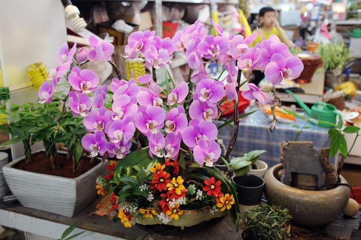 使用優美花器插上蝴蝶蘭,自用、送禮兩相宜