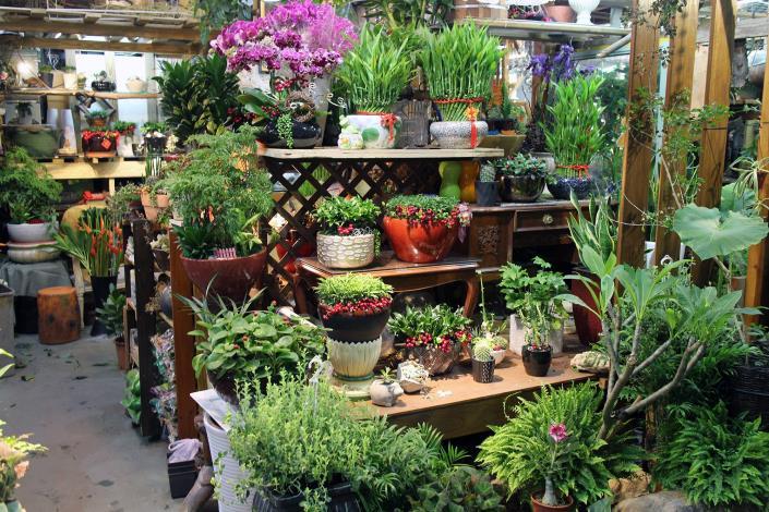 花樣百出花綠生活館是協助民眾居家綠美化的高手,門市有各種率植栽、盆栽、盆花樣品可供挑選