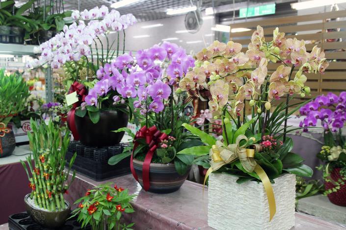 各種花色系的蝴蝶蘭琳瑯滿目任君挑選,每一盆都是送禮的好伴手