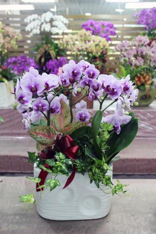插在美麗花器上的蝴蝶蘭,擺放在室內更顯高雅氣質