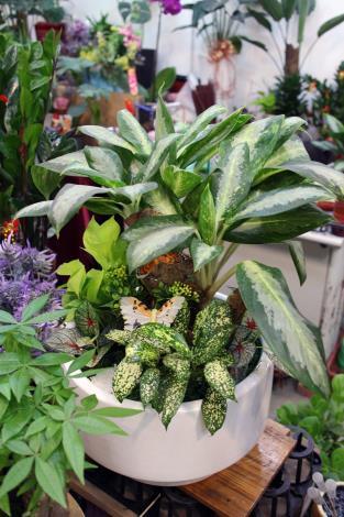 這盆盆栽上面還有蝴蝶裝飾,更添自然意境