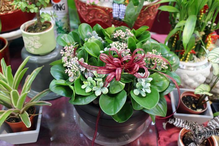 深具創意的花禮盆栽