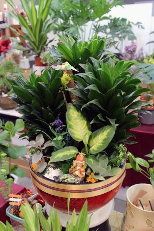 盆栽、盆木加一點創意,令人會心一笑