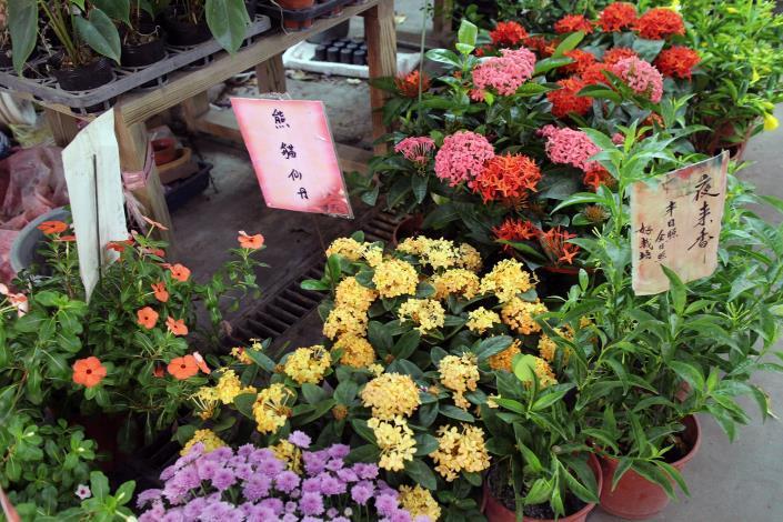 各種熱門的植栽,如大仙丹花、熊貓仙丹等,這裡也都有