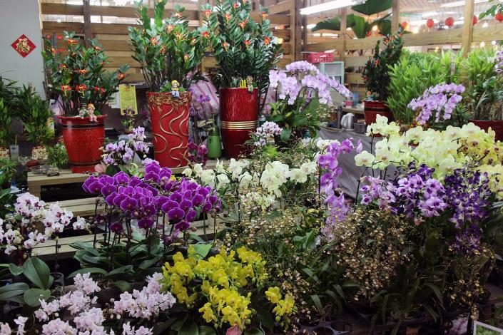 蘭花及各種盆栽、盆木,是餽贈升遷、喬遷、開幕誌慶的最佳好禮
