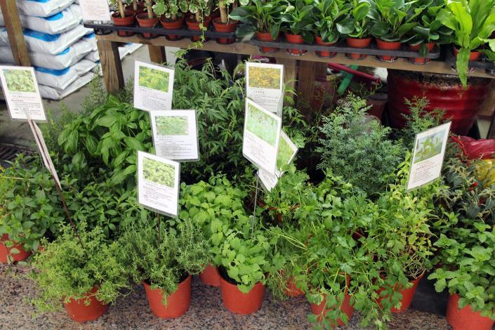 攤位前的各種香草植物,上面還有圖鑑和文字解說,連小朋友一看都懂