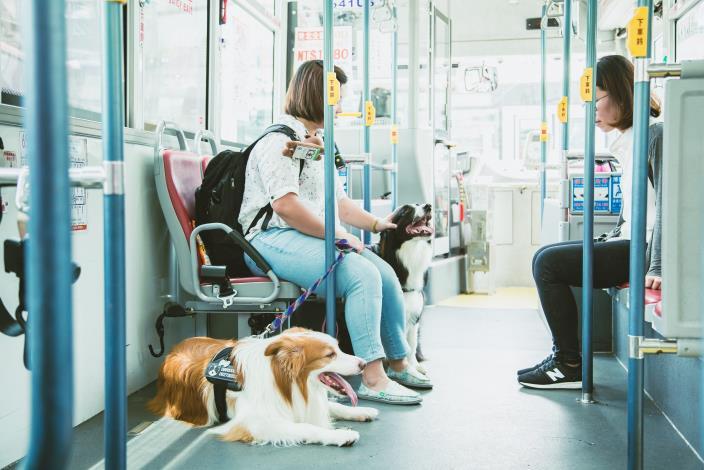 照片2.臺北市推出的狗狗友善公車受到動物友善城市指數調查研究的關注[另開新視窗]