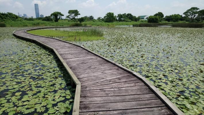 圖三、香港拉姆薩爾國際重要濕地---米埔自然保留區一景
