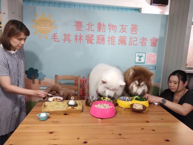 一直是晴天店狗阿魯與寵物網紅麥克噗優盡情品嚐寵物餐