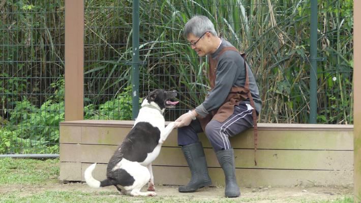 圖2. 志工王大哥與犬隻玩耍及訓練互動