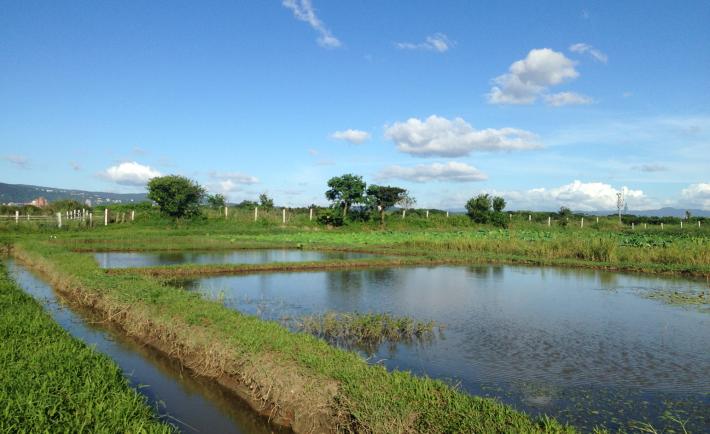 圖2.心濕地導覽,可窺探大台北的世外濕地秘境。