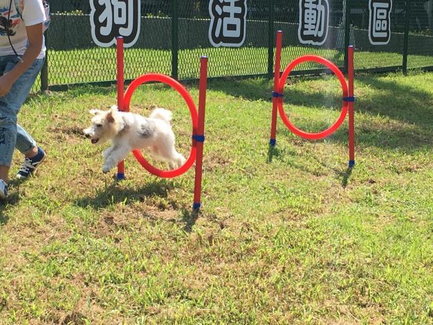 狗狗依寶搶先體驗北勢湖公園狗活動區敏捷犬設施