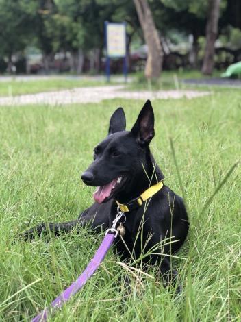 小力平日舒服地趴在校園草皮上休息