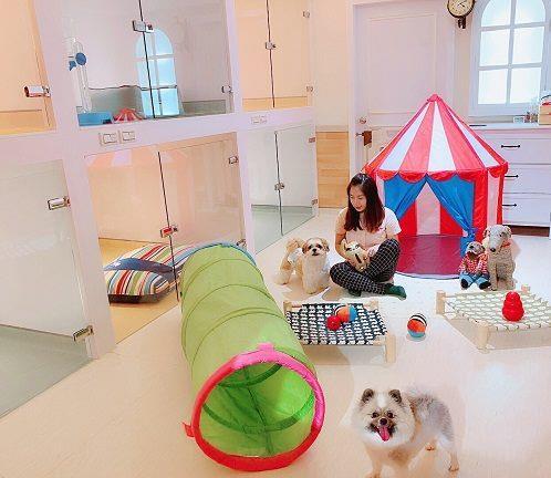 D&Y寵物美容時尚旅店(誼文寵物生活館)