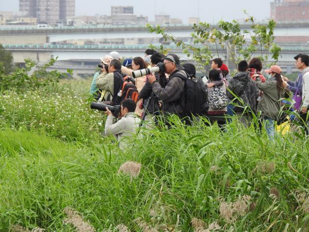 圖3.每年11月開始華江雁鴨自然公園總是吸引許多愛鳥人士來賞鳥。