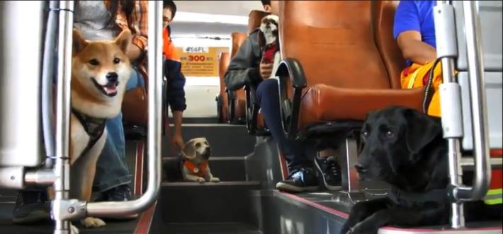 北市消防局搜救犬EVA和狗狗們一起搭乘669路「臺北市週末假日友善狗狗公車」。