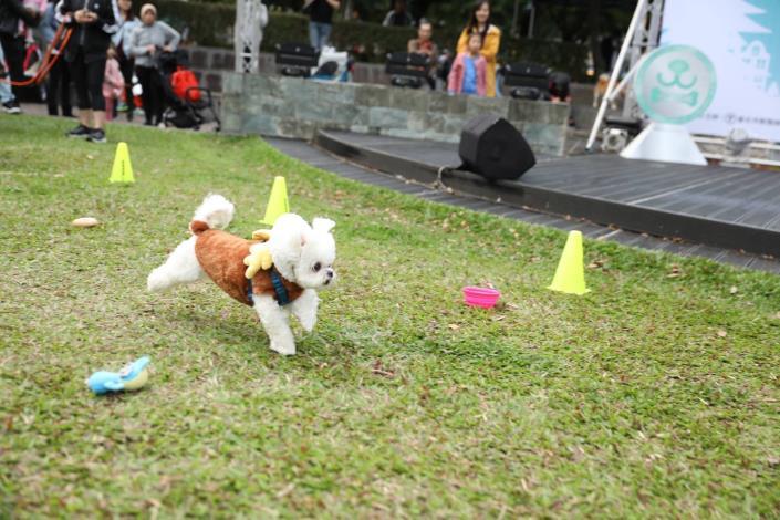 圖14. 可愛狗狗變裝參加毛孩障礙賽