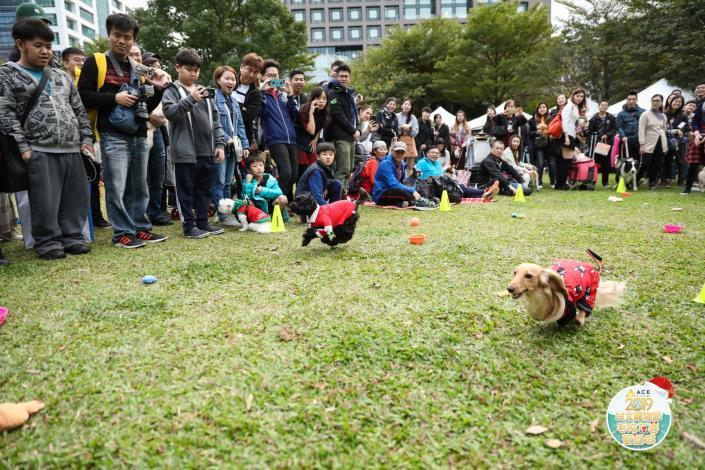 圖13. 狗狗們在毛孩障礙賽中奮力衝刺