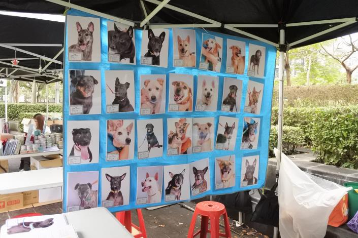 圖6. 臺北市動物保護處待認養狗狗照片牆