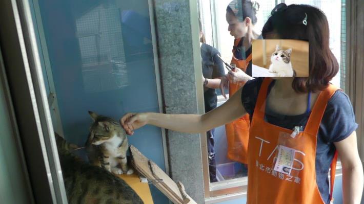 圖四:貓咪與志工親近互動訓練課程